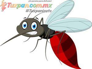Mosquitos playa de Tuxpan