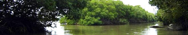 Manglares en Tuxpan, Veracruz - Qué visitar