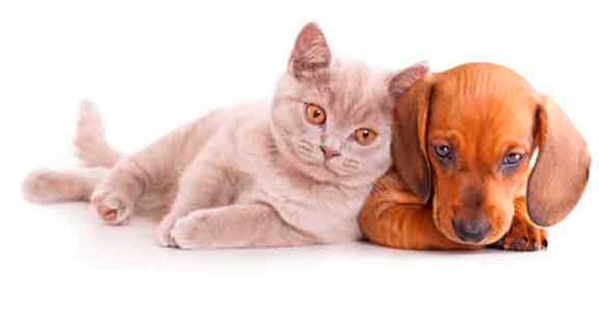 Perro y Gato - Mascotas Tuxpan